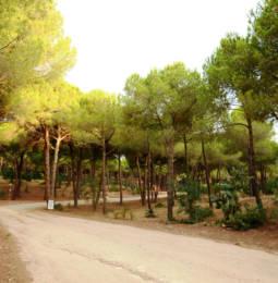 Strada del camping