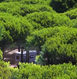Camper all'ombra della pineta
