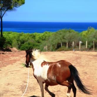 Pony in Campeggio